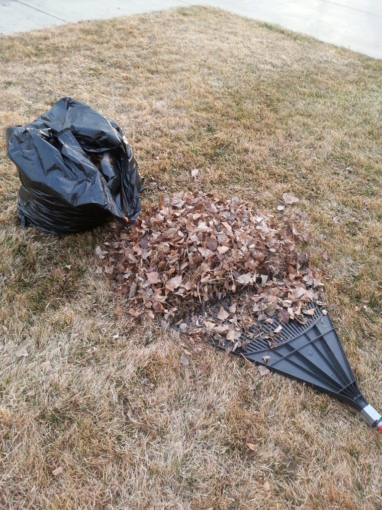 Raking leaves in February!